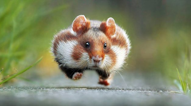 funny-animal-photos