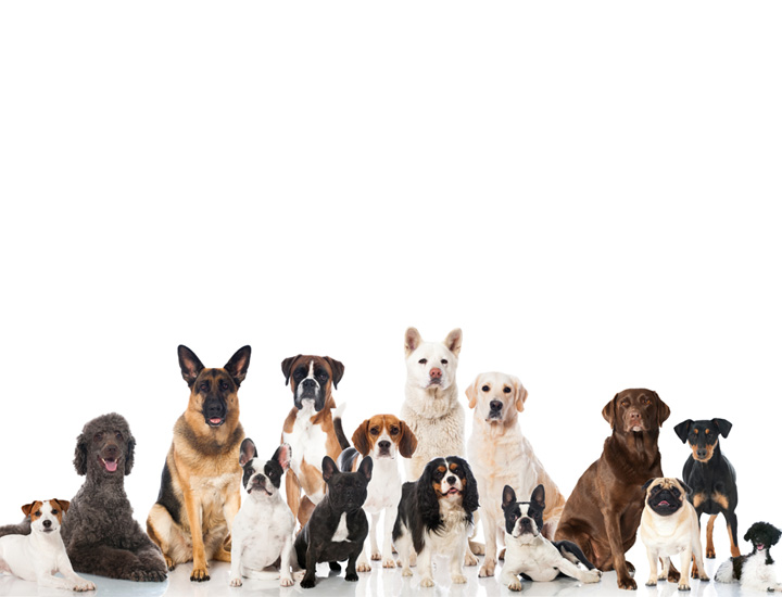 group-of-dogs