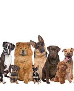 group-of-dogs2